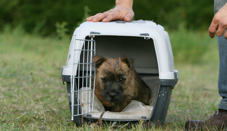 Dog Traveling Kennel