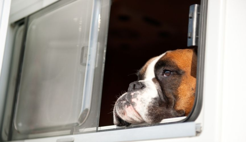 Caravan travel with pets after Brexit