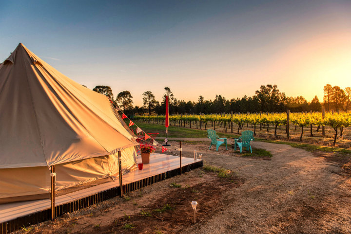 Glamping by Vineyard